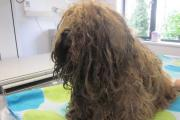 FINED: Dorset vet who allowed her dogs to become severely matted